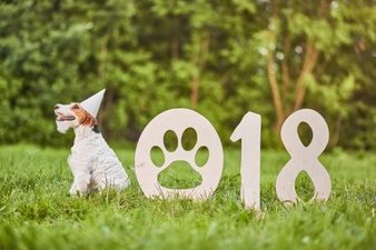 Adorable chien fox terrier heureux au parc 2018 nouvel an greetin 7502 6