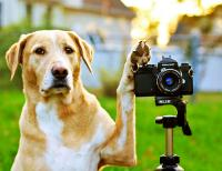 Chien avec appareil photo